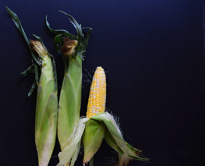 Fresh ears of corn for making our Summer Corn Dip recipe