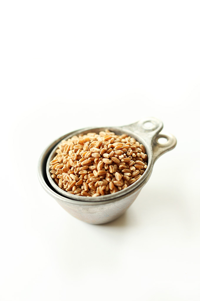 Measuring cup filled with wheat berries for a vegan Wheat Berry Salad